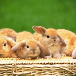46472-bunnies-four-cute-rabbits
